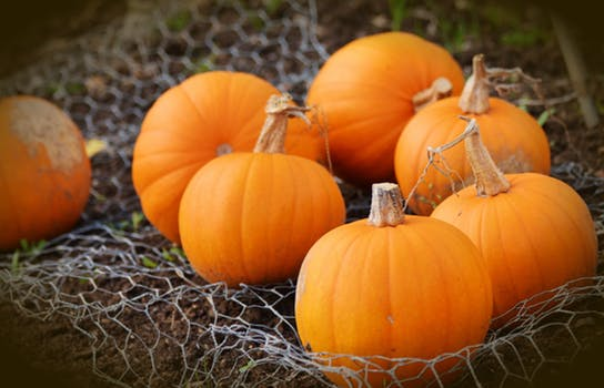 Pumpkin Festival and Haunted Ride
