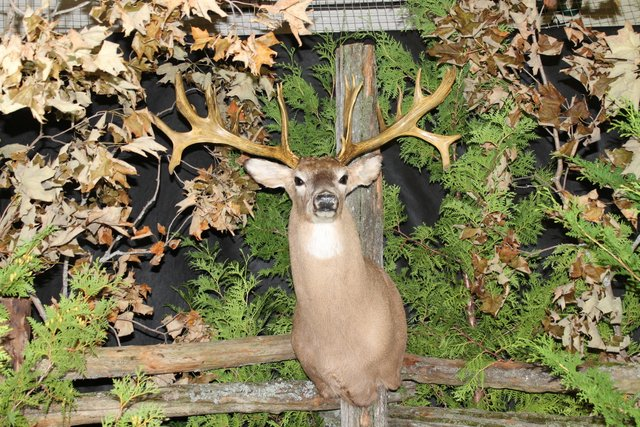 Manitoulin Deer Show
