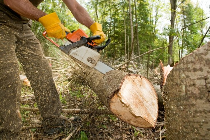 Learn to Operate a Chainsaw Safely and Effectively